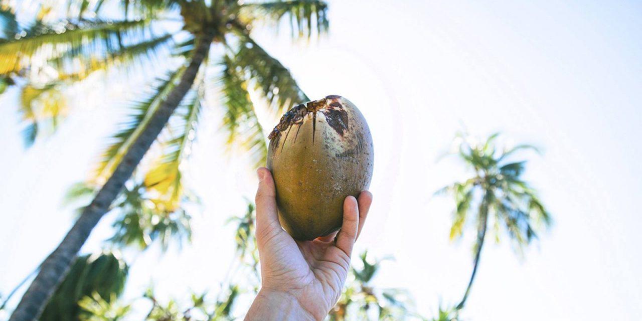 Kokosöl – so vielseitig und gesund