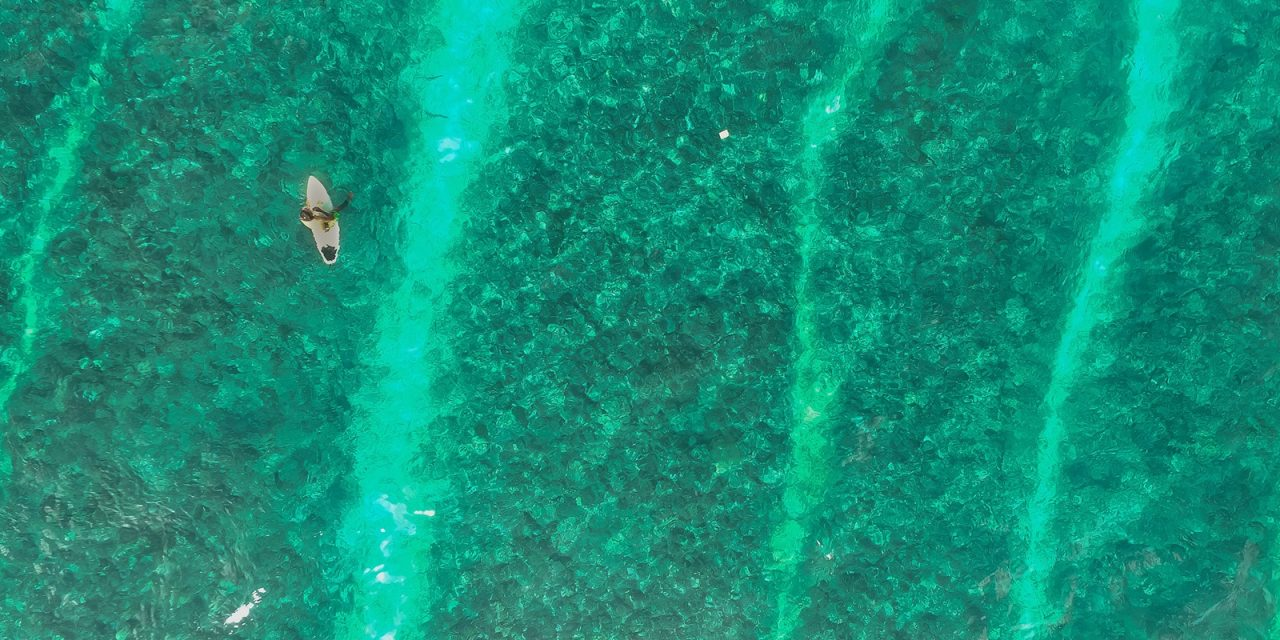 Surfer und Haie – Freunde oder Feinde
