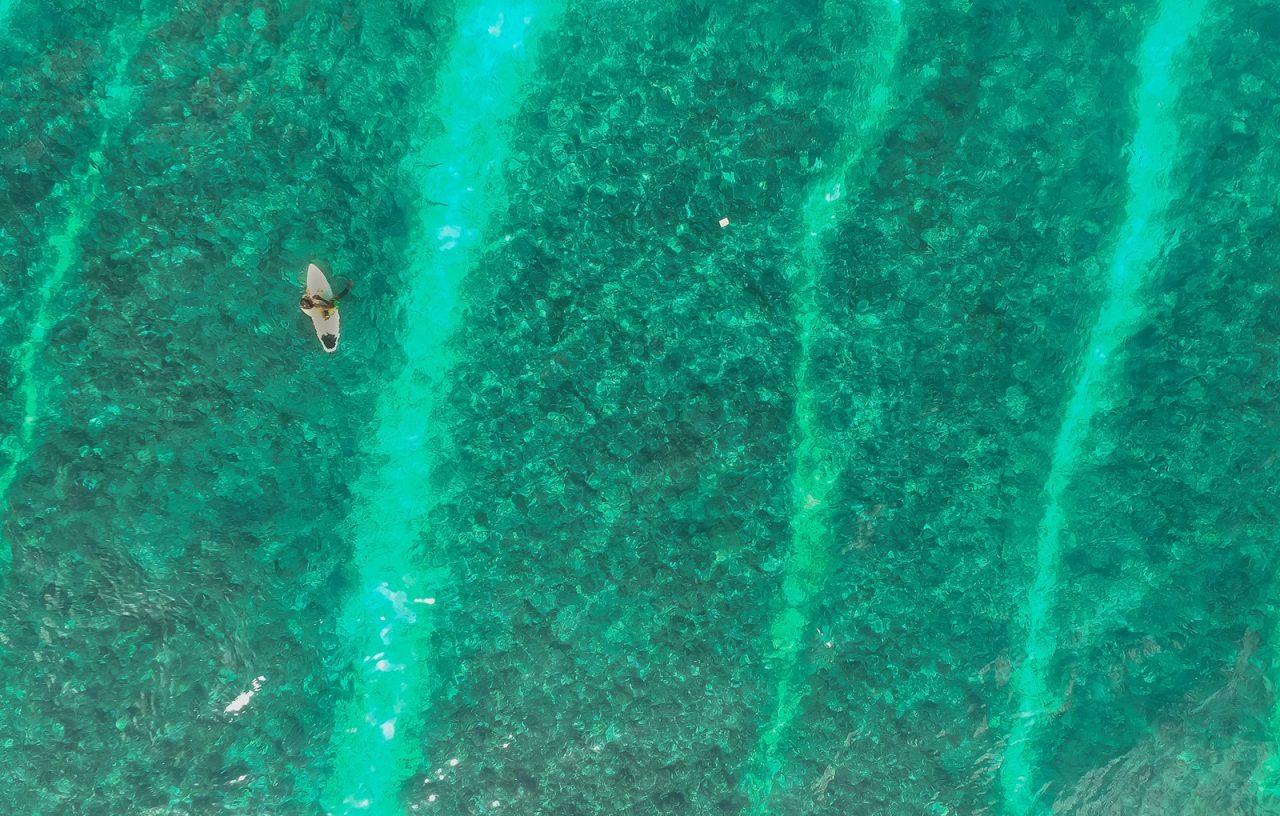 Surfer und Haie