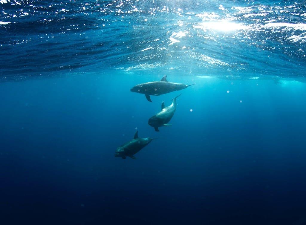 Plastik Verschmutzung Ozean