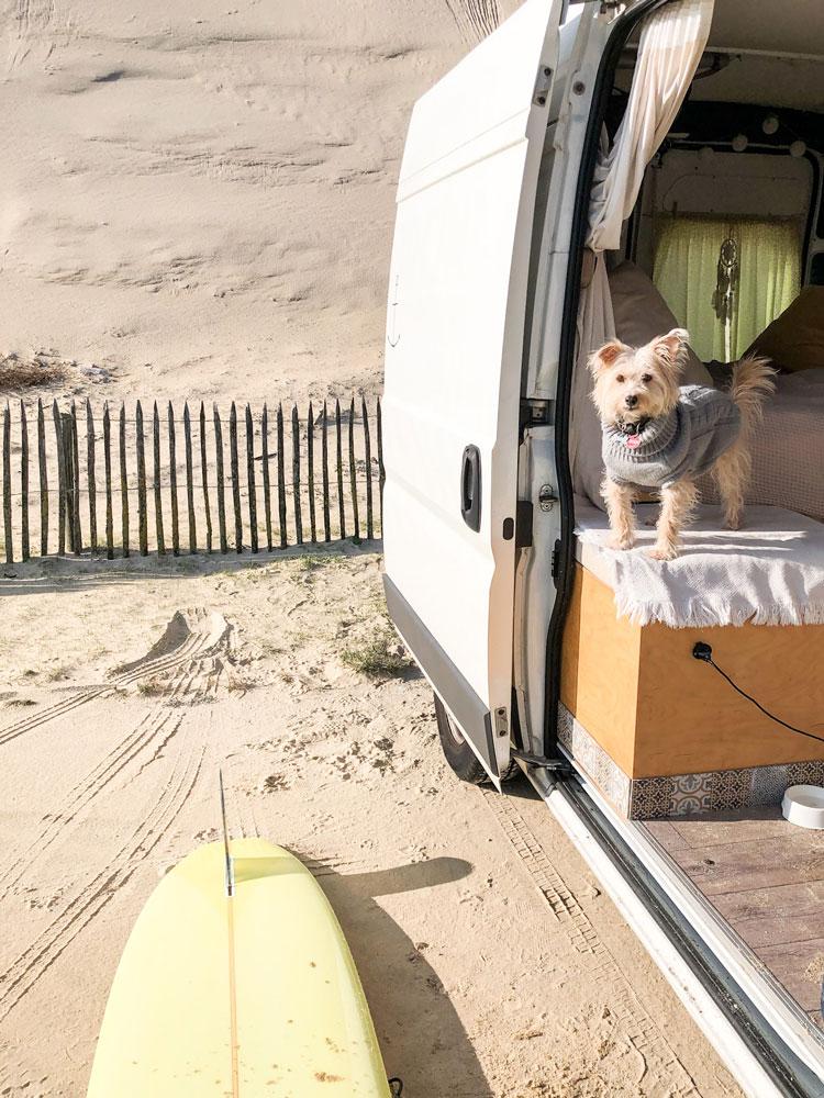 Hund in Van
